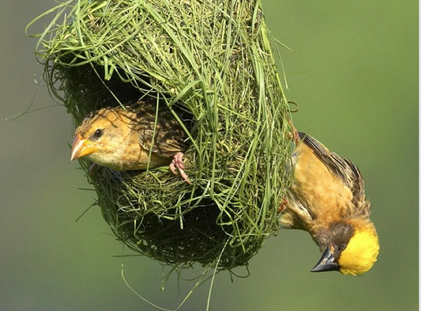 Love is in The Air: Valentine's Packages 2021 and The Weaver Bird